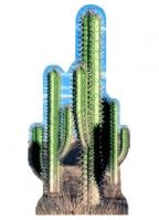 Cut-out van een cactus